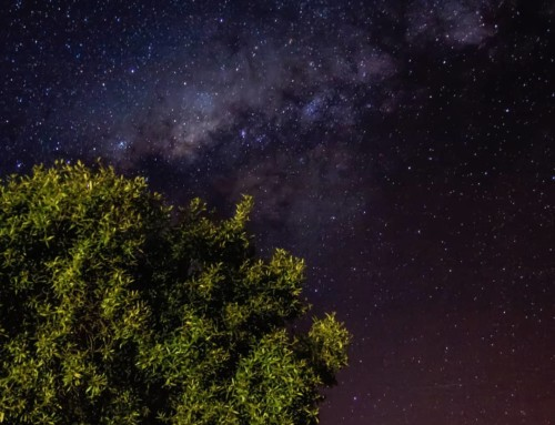 Make time for the stars at Buffelsdrift Game Lodge