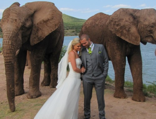 The African Bush Wedding of your Dreams awaits you!