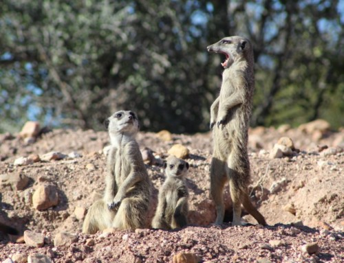 Things to see and do in the Klein Karoo