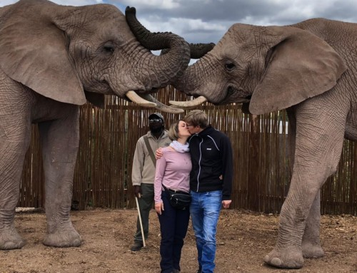 Enjoy an ethical elephant experience with Buffelsdrift Game Reserve