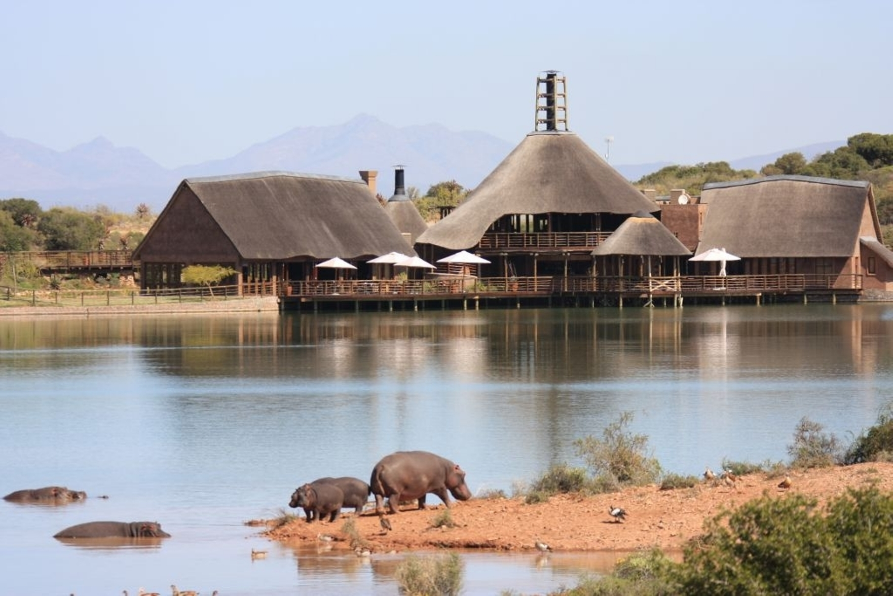 Lodge with hippos large
