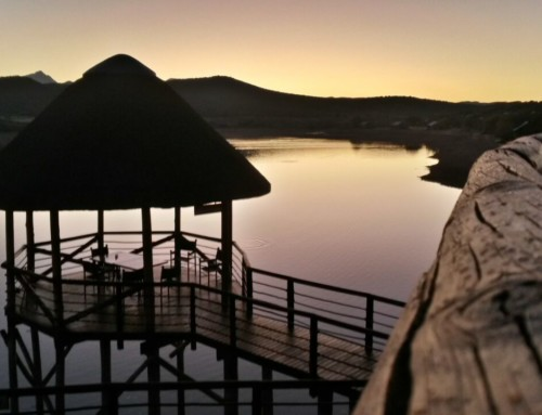 Looking Forward to Welcoming Our Guests Again SOON to Buffelsdrift Game Lodge