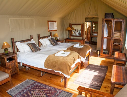 Why glamping in the bush should be your next exciting holiday destination